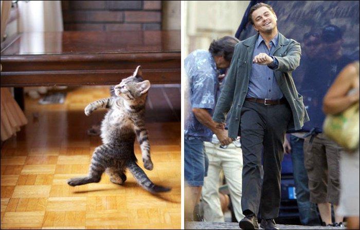 Ce chat adopte la marche joyeuse d'un acteur américain. Je parle bien sûr de :