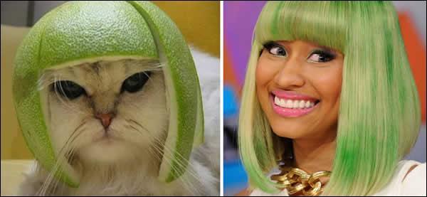 Il suffit de mettre un citron vert retourné sur la tête de ce chat pour qu'il ressemble à la chanteuse américaine :