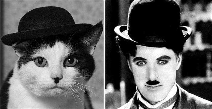 Ce chat noir et blanc porte un chapeau melon nous rappelant le maître du cinéma muet :