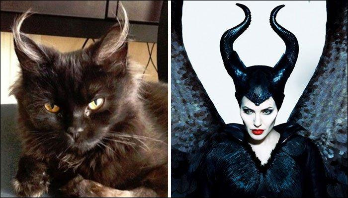 Les poils sortant des oreilles de ce chat font assurément penser aux cornes de l'antagoniste du Disney :