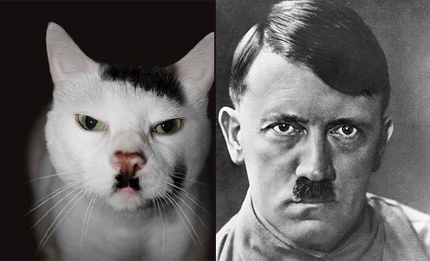 Ces chats qui ressemblent à des personnalités