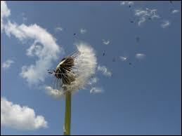 """Que signifie l'expression """"Mettre fleurette au vent"""" ?"""