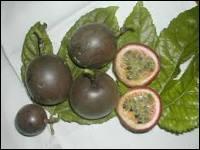 Plante grimpante de la famille des Passifloraceae, la grenadille est riche en vitamine C. Elle l'est aussi en vitamine :