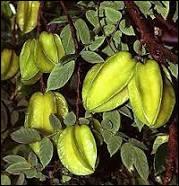 Le carambolier est un arbre des régions tropicales, originaire d'Asie. Son fruit, la carambole, est une baie dont les carpelles soudés forment une étoile. De combien de carpelles est composé ce fruit ?