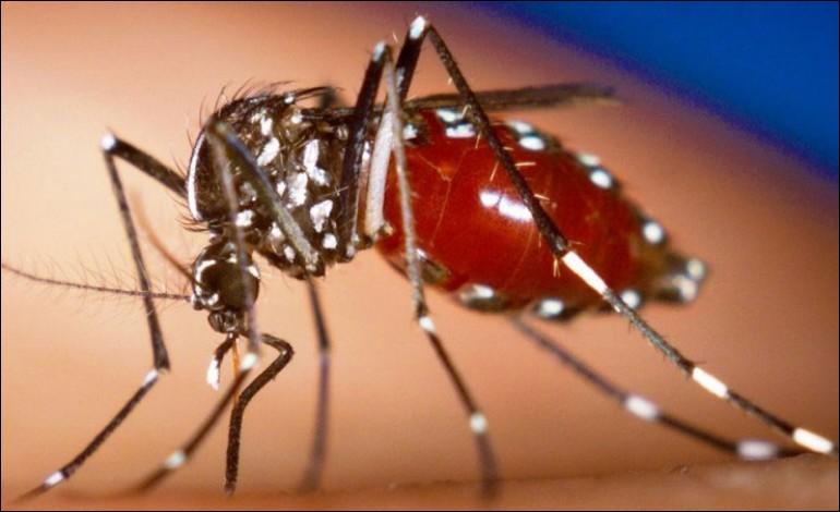 Quel est le nom de ce virus qui frappe actuellement l'Amérique du Sud et qui est transmis par le moustique ?