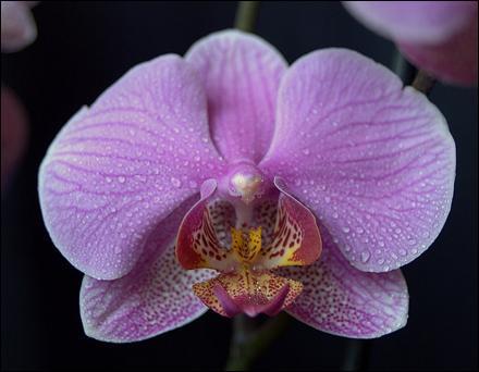 Quelle est cette orchidée que vous devez bien observer ?
