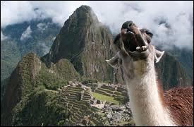 Photographier le Machu Picchu en ayant failli oublier votre compagnon laineux, ce n'est pas sympa... Quelle est la capitale de ce pays ?