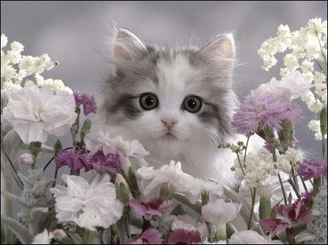 Qu'est-ce que l'onyxectomie, chez le chat ?