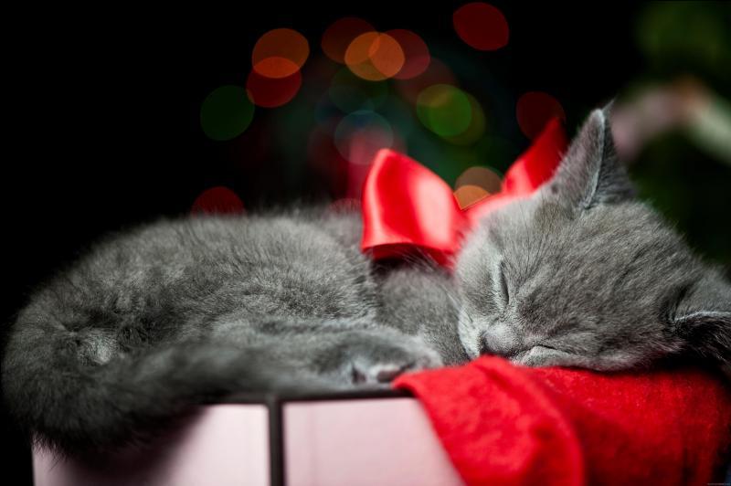 Combien de temps dort un chat ?