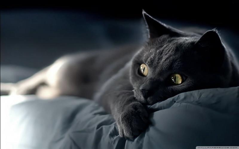 Un chat peut voir dans le noir complet :