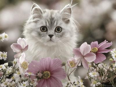 Quiz dédié au chat !