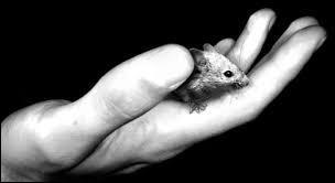 """A quel auteur américain doit-on le roman """"Des souris et des hommes"""", publié en 1937 ?"""