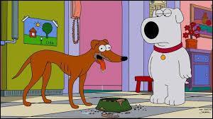 Qui sont ces chiens que tout oppose ?