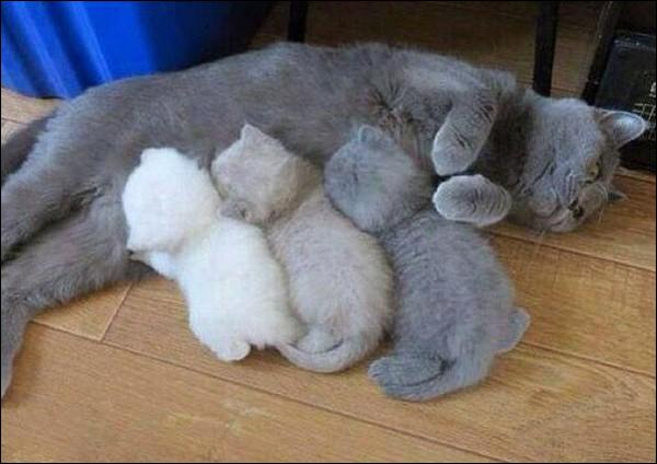 Quel sera l'âge des chatons quand leur maman leur apportera leur première proie vivante ?