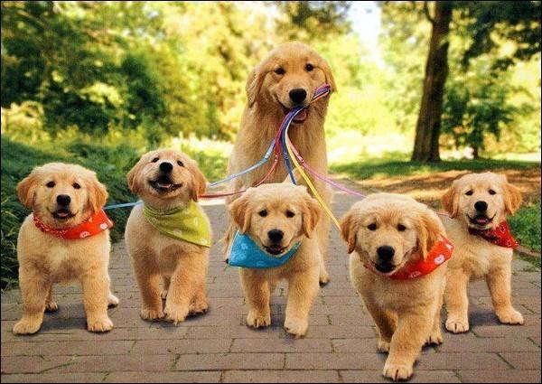 Il ne manque que le papa ! Quelle est cette petite famille ?
