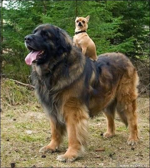 A quoi ressemblent ces deux bestioles ?