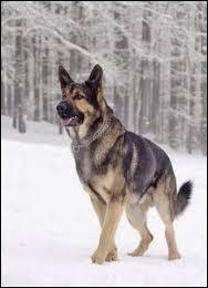 Dans le faux monde, comment s'appelle le chien du père de Jake ?