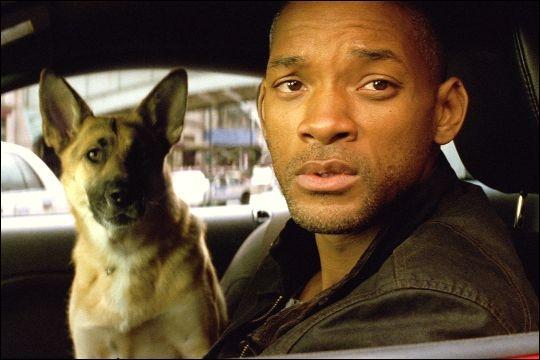 De quelle façon, Sam, fidele compagnon à quatre pattes du docteur Robert Neville, meurt-il dans le film « Je suis une légende » ?
