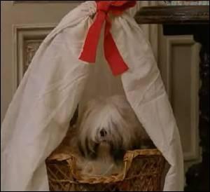 Vous souvenez- vous dans quel film Choupette fait quelques apparitions ?(Un indice : « Elle est où la queue queue, elle est où la têtête ? »)