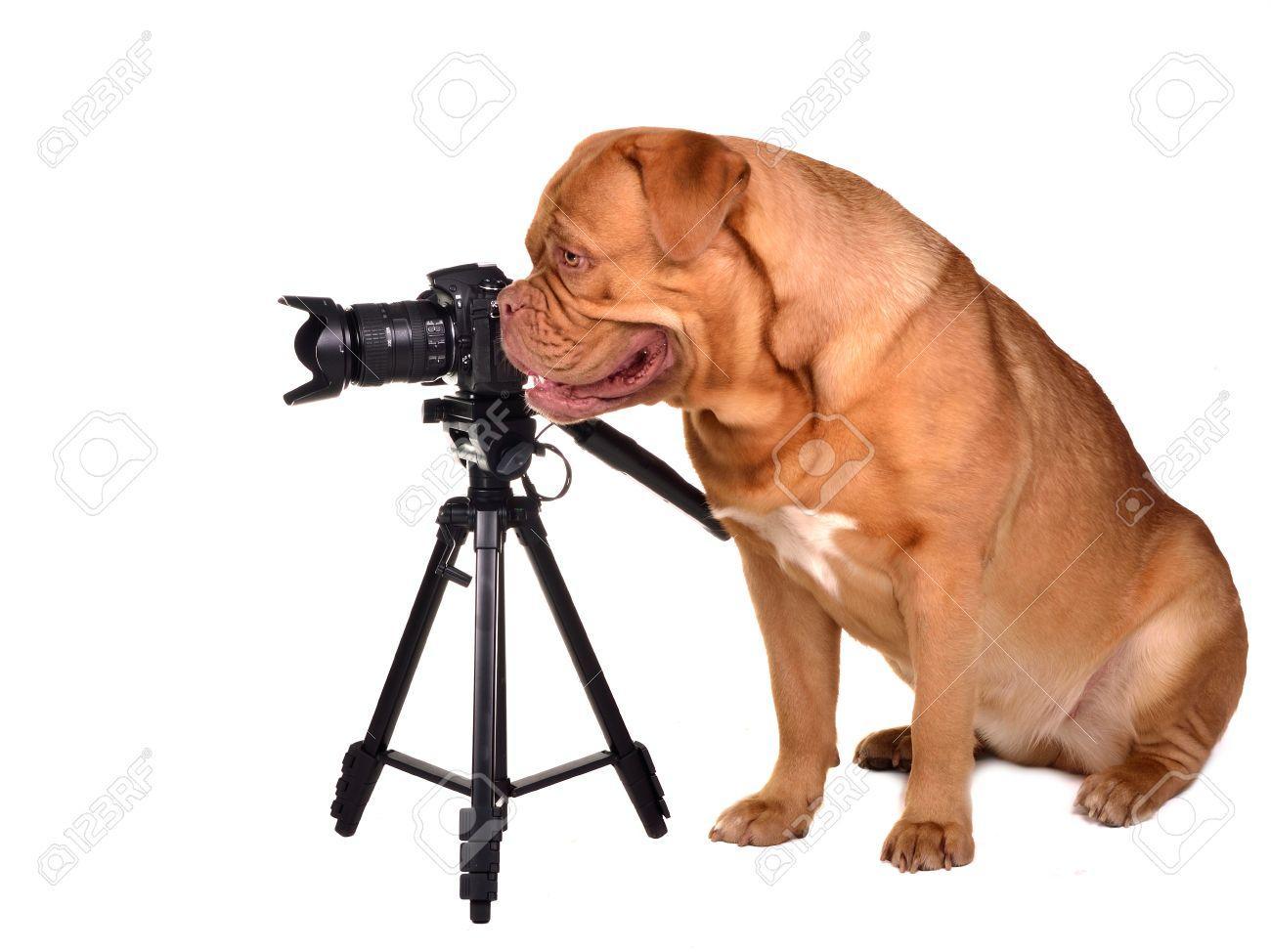 Les films qui ont du chien
