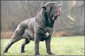 Comment s'appelle la race du chien présentée sur la photo ?