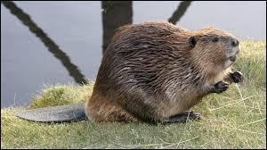 Dans quel pays cet animal est-il emblématique ?