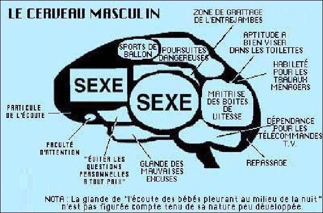 Perle du bac : la sexualité !