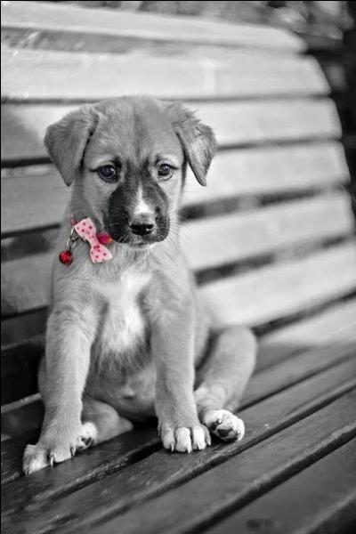 Lequel de ces aliments, très mauvais pour son coeur, peut faire mourir votre chien s'il en absorbe en grande quantité et qu'il est de petite taille ?