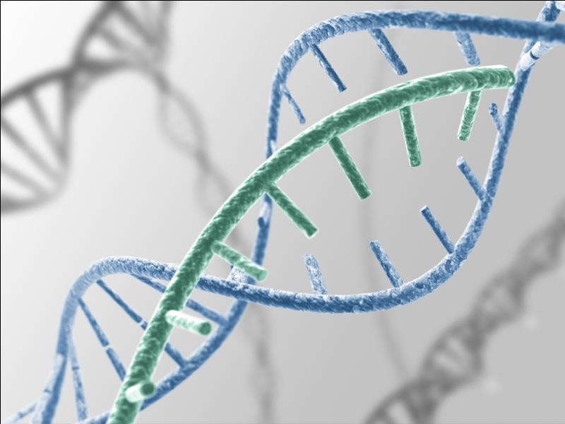 Commençons l'étude de cette maladie au niveau génétique. Combien de chromosomes 21 possède un individu atteint de la trisomie 21 ?