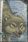 Comment s'appelle le rival de Faolan, le loup jaune à la dent ébréchée ?