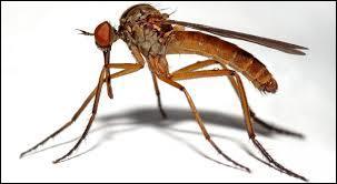 Le moustique est connu pour transmettre un grand nombre de maladies à l'Homme.Laquelle de ces maladies n'est pas transmise par le moustique ?
