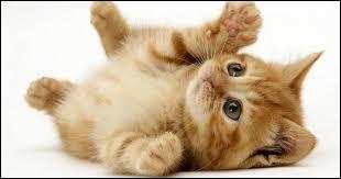 Même si les chats sont mignons, il est souvent recommandé aux femmes enceintes d'éviter leur litière. Et pour cause, une des maladies que le chat nous transmet peut aussi affecter le fœtus.Quelle est cette maladie ?