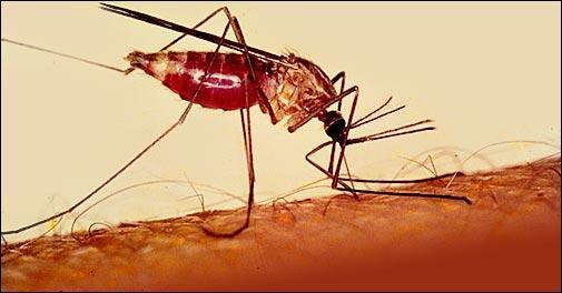 Sous quel autre nom connaît-on le paludisme ?
