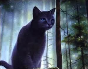 Comment s'appelle cette chatte ?