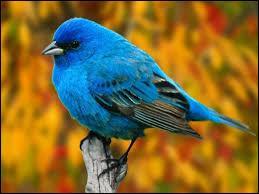 "Que signifie ""bird"" en français ?"