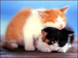 Pour finir, comment appelle-t-on un chat castré ?