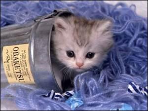 Il existe beaucoup d'espèces de chats... Il y en a :