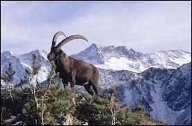 À quelle famille de mammifères appartient le Bouquetin des Alpes ?