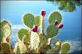 Dans quel genre d'environnement naturel les cactus vivent-ils ?