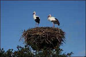 Quels sont ces oiseaux ?