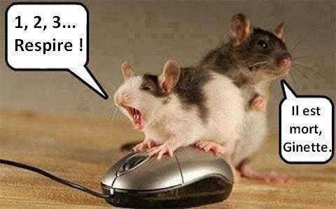 Du Rire : Humour, blague, vidéo, photo comique ...  Tout pour rire, s'amuser