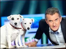 De quelle race sont les deux chiens de Christophe Dechavanne ?