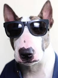 Les chiens des stars !