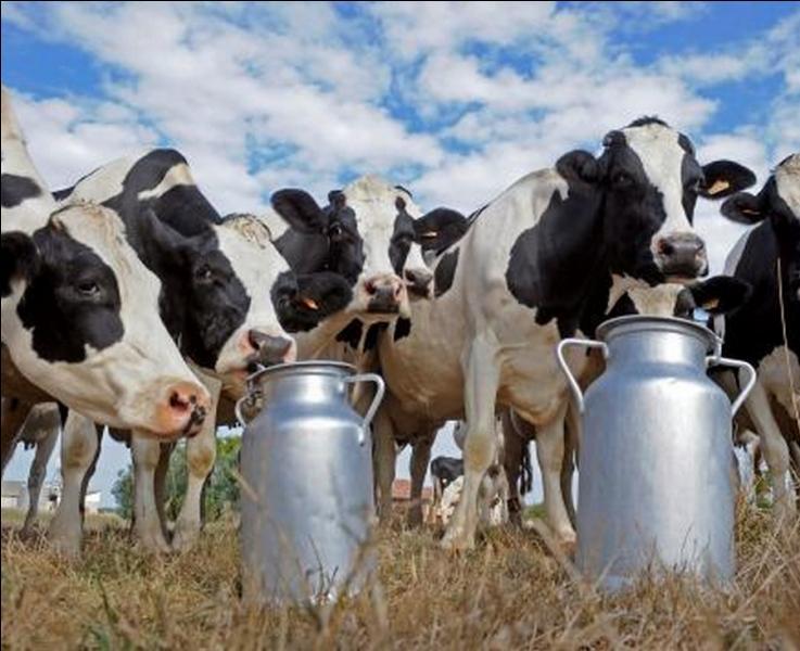 Un peu de gastronomie pour terminer. Lequel de ces fromages au lait de vache, est un fromage au lait cru, à pâte molle et croûte fleurie ?