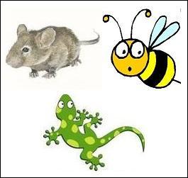 Lequel de ces animaux est capable d'autotomie fatale ?