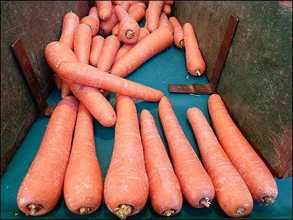 Quelle carotte possède une appellation d'origine contrôlée ?