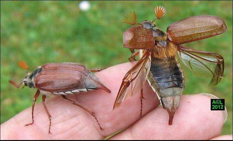 Mon premier souligne l'effort, mon second est arrivé au monde, mon troisième est le tien, mon tout est un insecte !