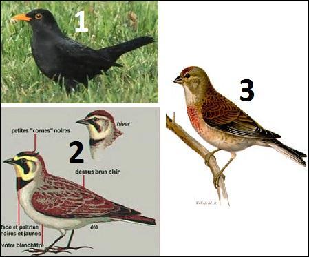 De quel oiseau avez-vous la tête si vous manquez de mémoire ?