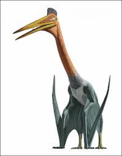 Quel est le nom de ce dinosaure du genre ptérosaure qui vivait au crétacé supérieur en Amérique du Nord, il y a 66 millions d'années environ ? (Ce dernier était le deuxième plus grand animal volant ayant existé. Il mesurait 12 mètres d'envergure, 8 mètres de long, 6 mètres de haut s'il se déplaçait à quatre pattes, pour un poids de 100 kilogrammes).