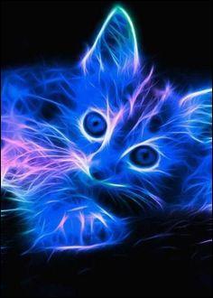 Combien de races de chats y a-t-il dans le monde ?
